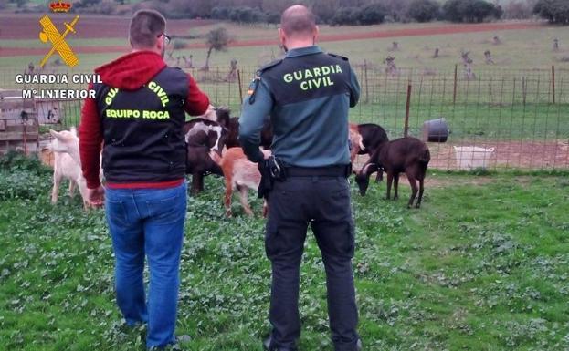 7b340b8e973d Investigan a dos vecinos de Almendral por el robo de cabras en  explotaciones del municipio
