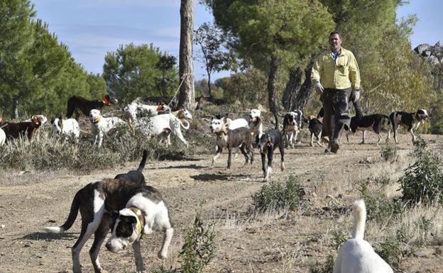 Extremadura inicia el expediente para declarar la montería y la rehala como Bien de Interés Cultural