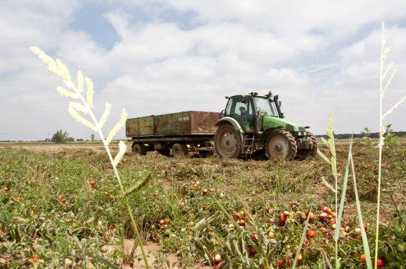 6f9e17986b845 Extremadura tuvo en 2013 el cuarto mayor tamaño medio por ...